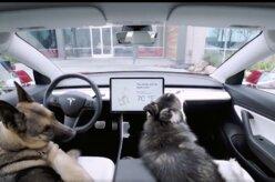 Carros da Tesla agora contam com modo cachorro
